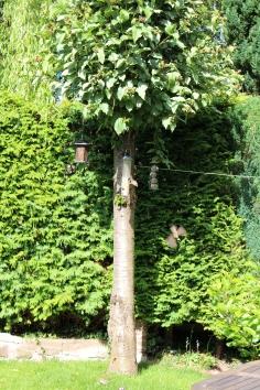Bird watching in the garden
